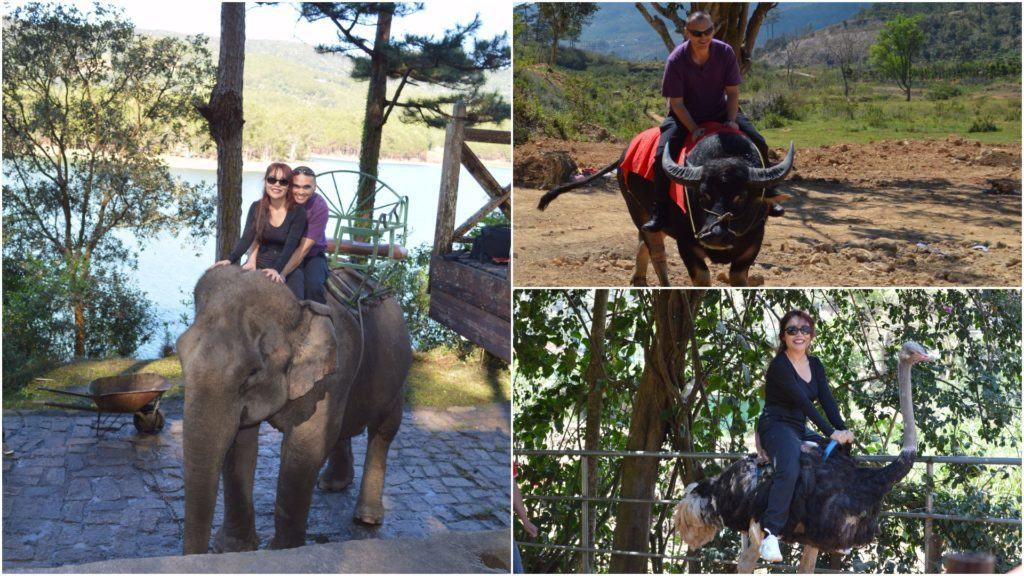 The Travel Ninjas Enjoying the Animal Encounters in Dalat, Vietnam