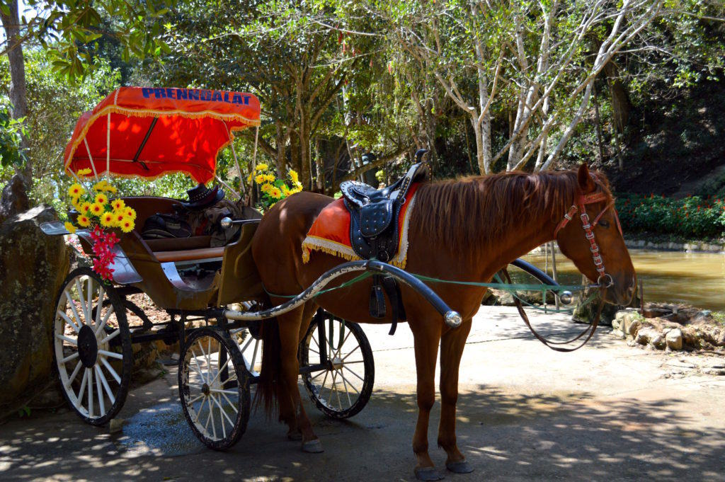 Romantic Carriage Ride at the Prenn Waterfalls in Dalat, Vietnam