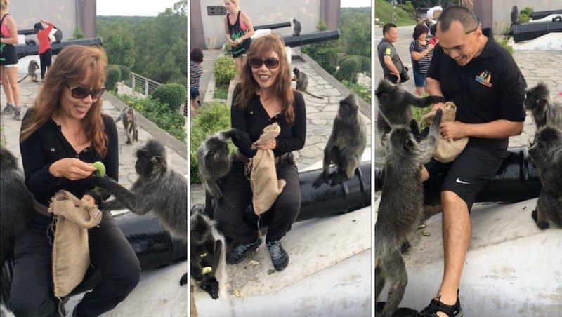 Feeding the silver leaf monkeys at Bukit Melawati near Kuala Lumpur, Malaysia