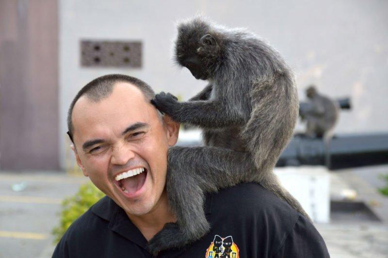 Getting Tickled by a Silver Leaf Monkey at Bukit Melawati near Kuala Lumpur, Malaysia