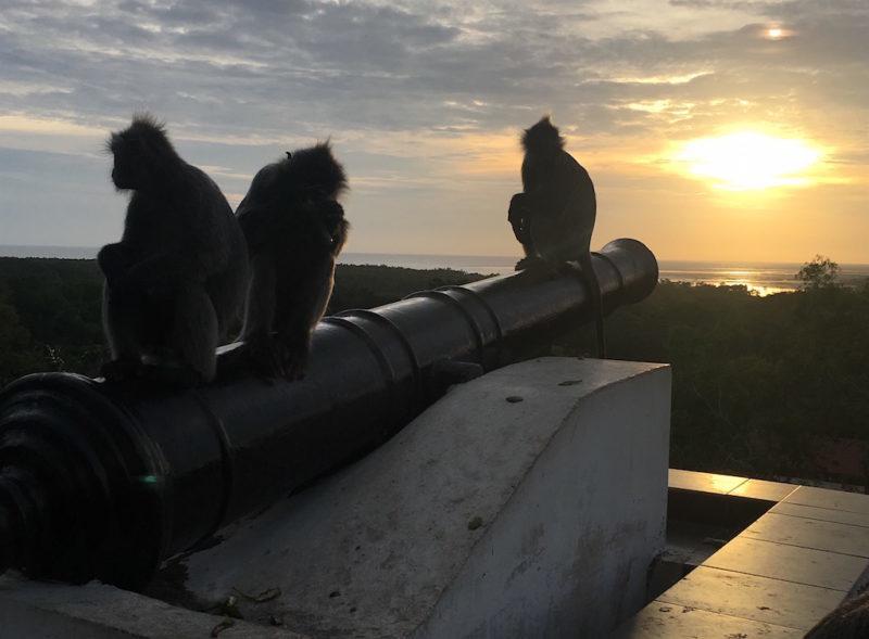 Peaceful silver leaf monkeys enjoying the sunset at Bukit Melawati near Kuala Lumpur, Malaysia