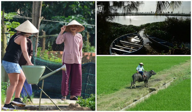 Hoi An Farmers, Water Buffalo, Scenic Countryside - things to do in Hoian, Vietnam