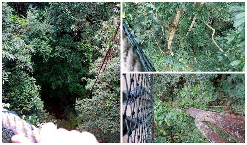Looking down from the Canyon Walk at Taman Negara near Kuala Lumpur in Malaysia