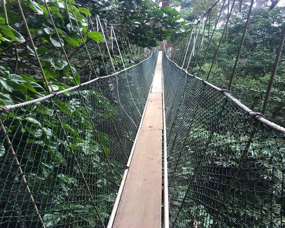 The Canopy Walk at Taman Negara near Kuala Lumpur in Malaysia