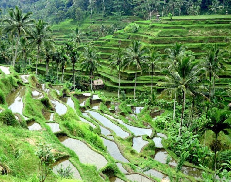 Bali's Rice Terraces – Natural-Cultural Things to do in Bali, Indonesia