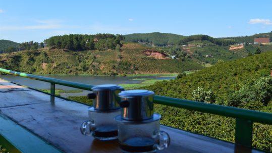 Dalat Coffee Plantation in Da Lat, Vietnam. Central Vietnam in Southeast Asia.
