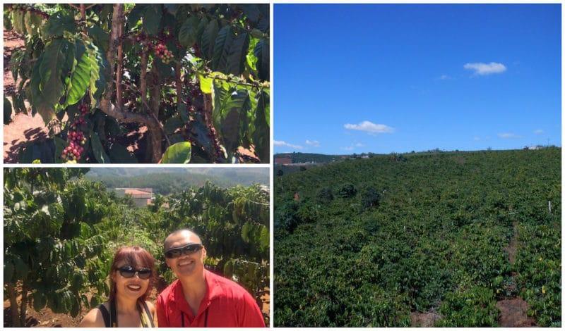 Enjoying the Pretty Coffee Plants at the Da Lat Coffee Plantation in Vietnam.