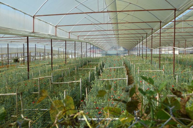 "Avoid ""Flower Village"" It's Just a Bunch of Greenhouses in Da Lat Vietnam located in Central Vietnam"