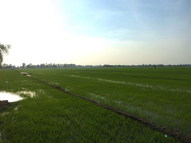 Things to do in Ho Chi Minh. The countryside of the Mekong Delta near Saigon Vietnam
