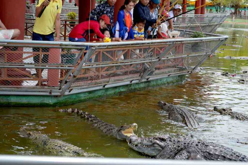 """Crocodile Fishing at Suoi Tien in Ho Chi Minh City Vietnam Saigon"