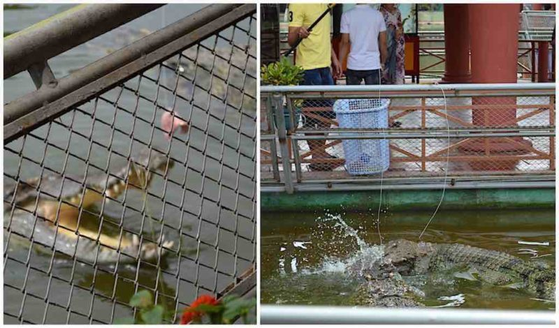 Crocodile Fishing at Suoi Tien in Ho Chi Minh City Vietnam Saigon